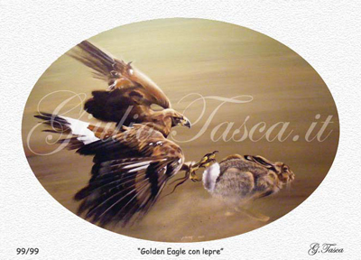 Golden eagle con lepre 50x70 - Price € 10,00 cad. + sped.