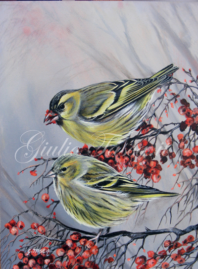 Lucherino (carduelis spinus) - Jahr 2011 - Private collection