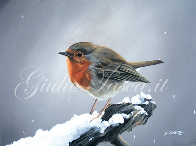 Pettirosso (erithacula rubecula rubecula) - Jahr 2011 - Private collection