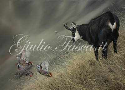 Incontri curiosi 70x50 - Jahr 2015 - Private collection